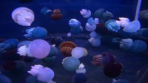Jelly_fish02